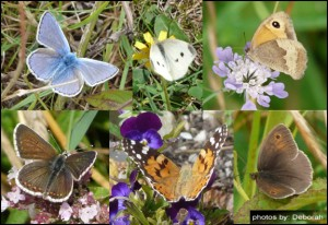 Just SOME of the butterflies spotted and photographed by Deborah